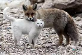 Fox & Cat Discuss Options Of Avoiding Hounds
